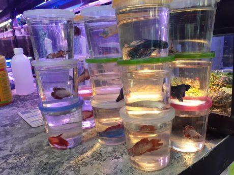 beta fish in jars