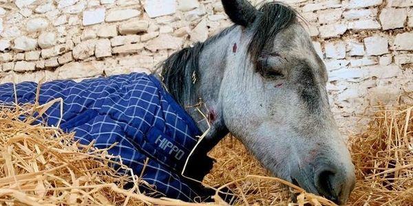 Jenna abused horse