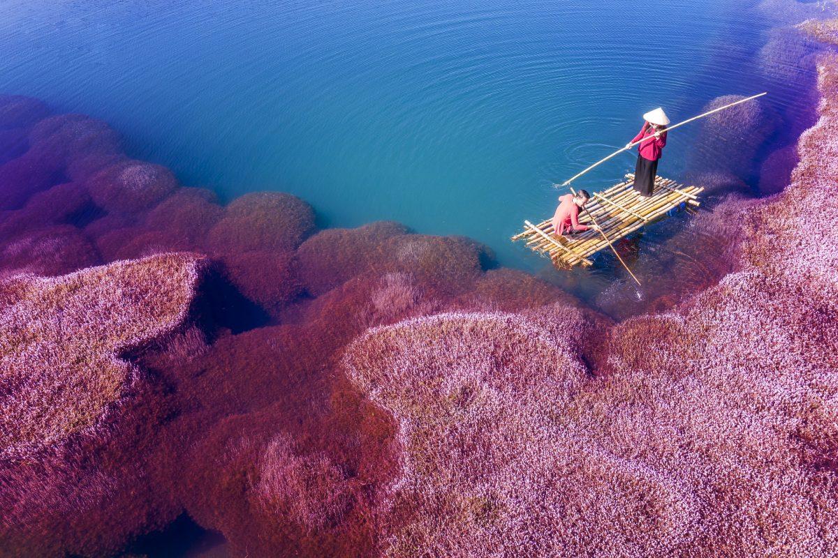 pink algae water