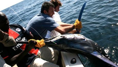 men pulling up big fish