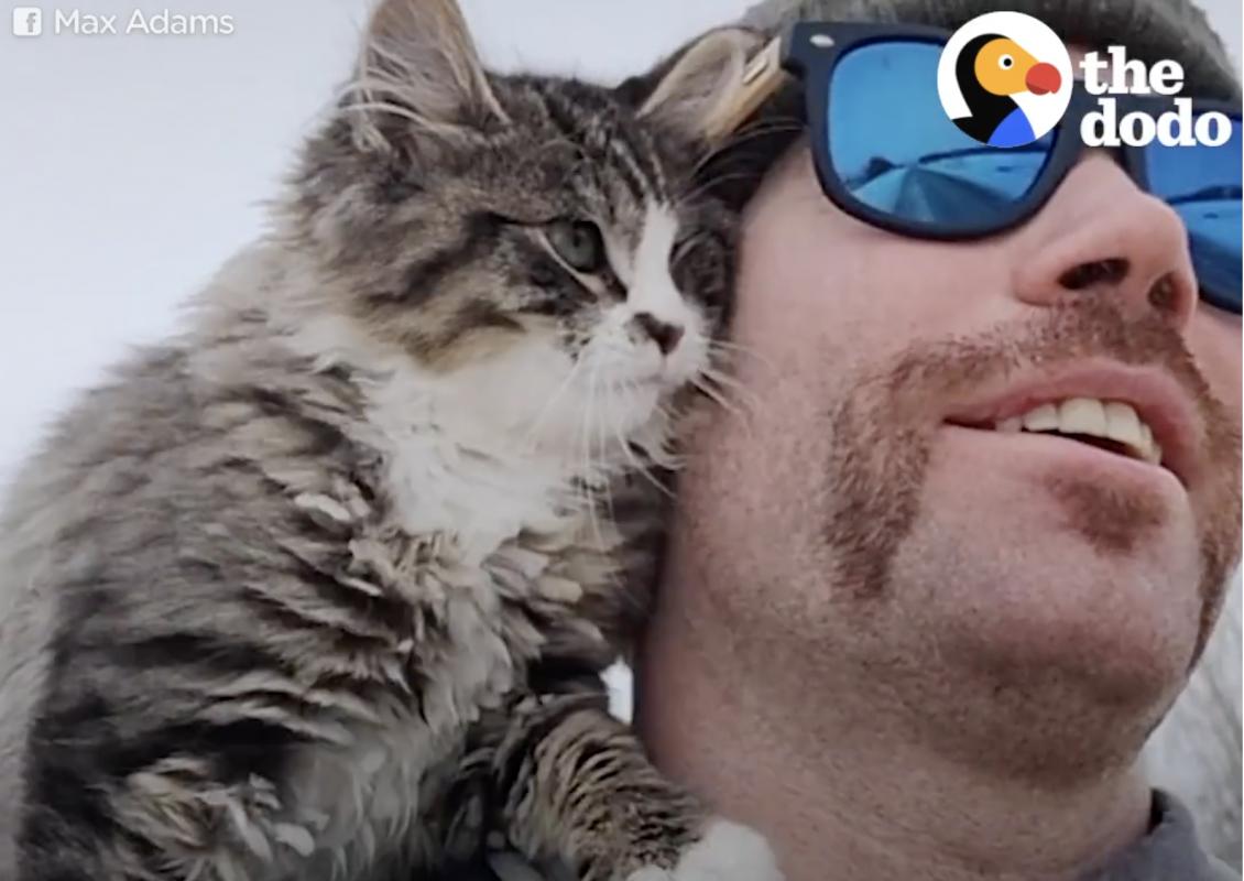Hiker Rescues Sweet Little Kitten Lost in the Snow [Video]
