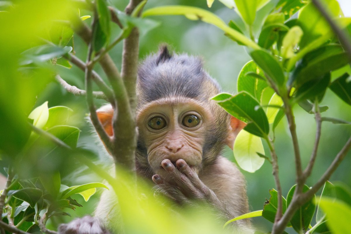 Monkey Tortured and Hung from Tree as Punishment for Stealing Food