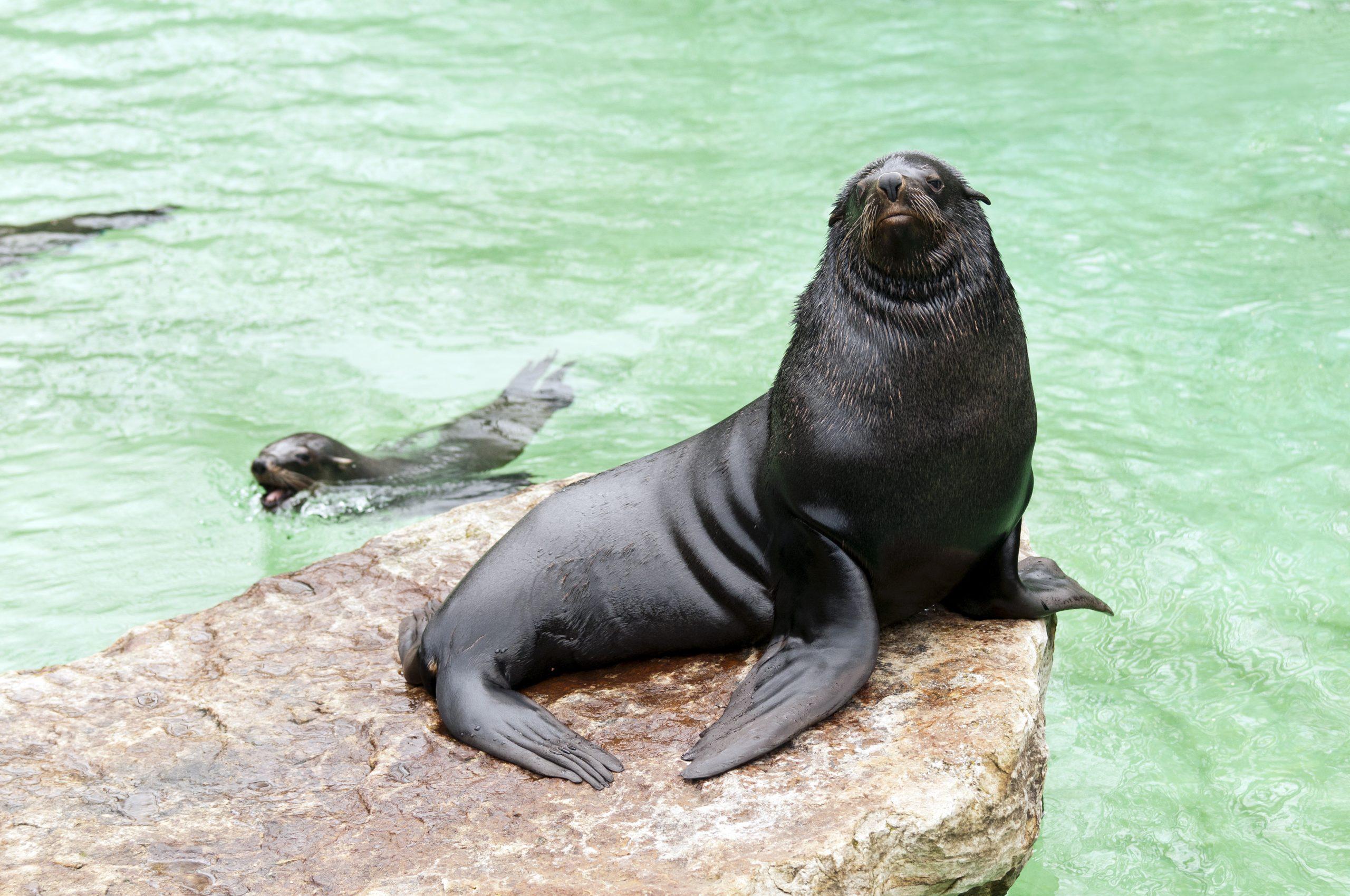 Seal at Zoo