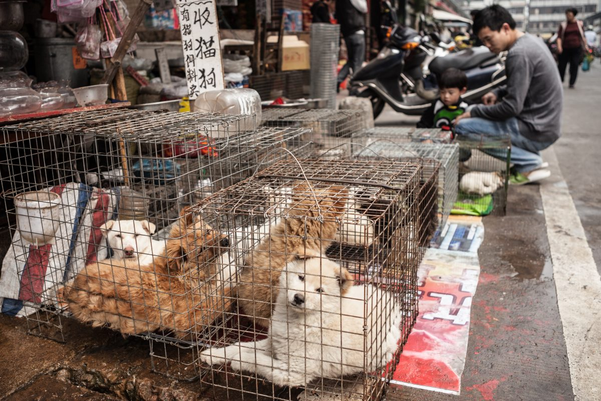 dogs in cages
