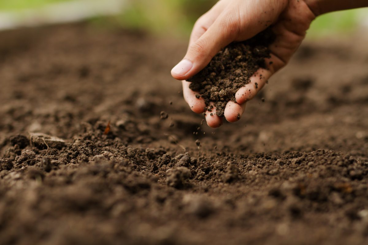 7 Ways to Keep Your Garden Soil Rich in Minerals Naturally Without Buying Products!