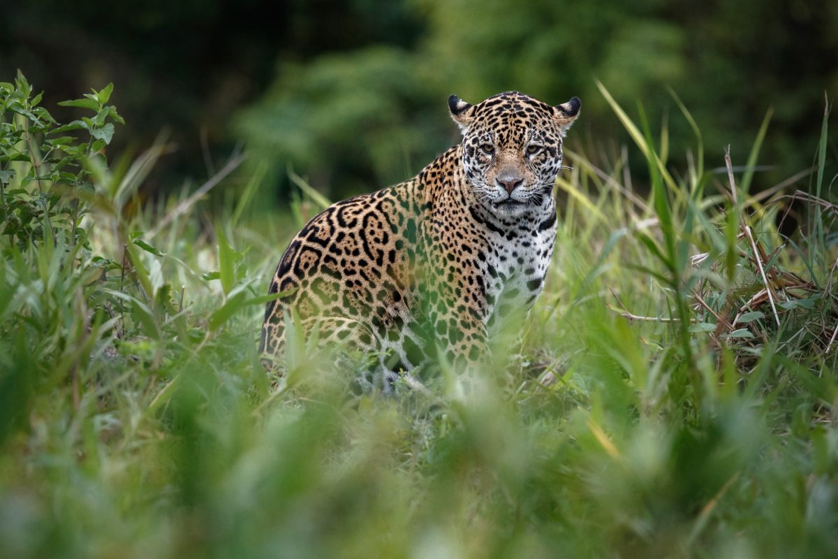New Report Show Millions of Species Illegally Trafficked from Brazilian Amazon