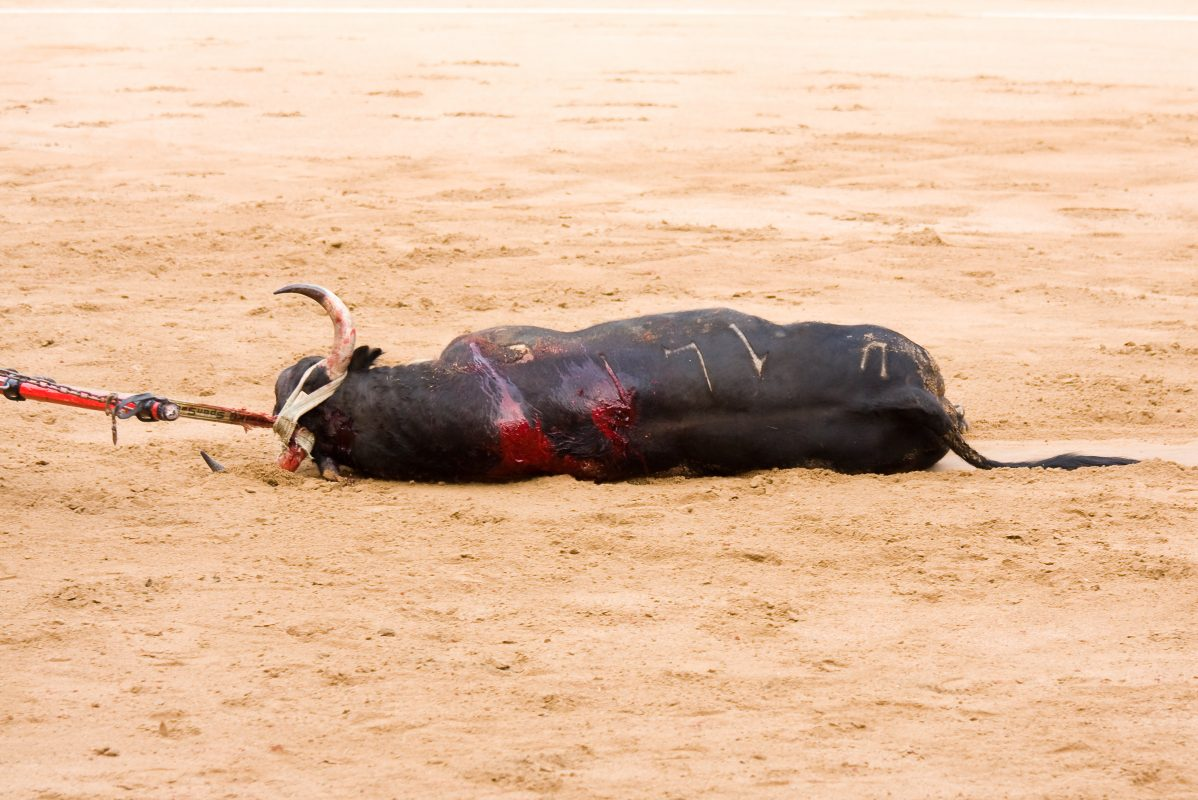 Bloodied Bull Dies In Spain's First Bullfight Since COVID Lockdown