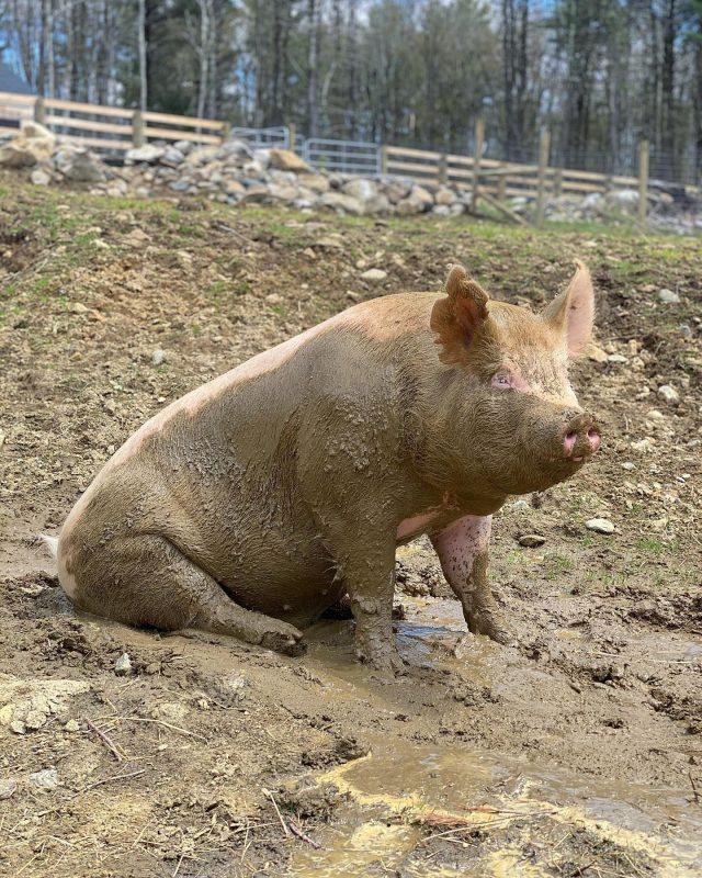 JP Farm Animal Sanctuary