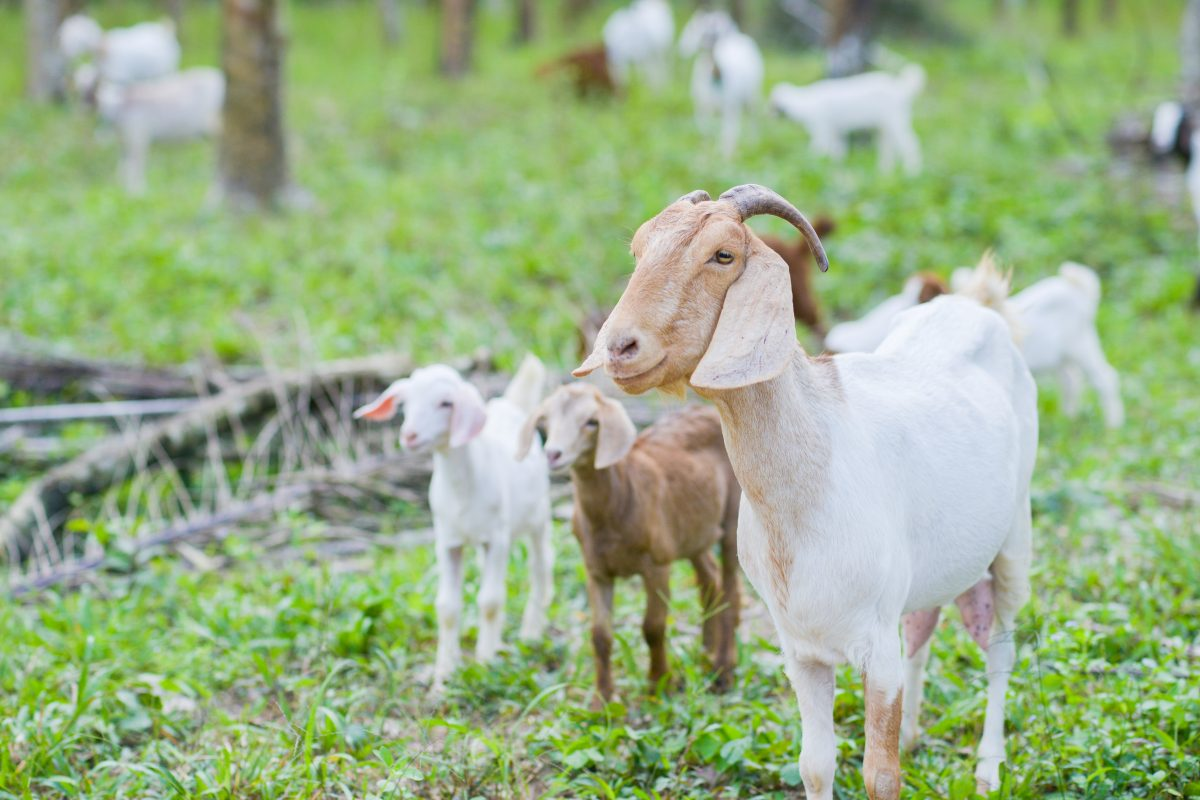 Joaquin Phoenix and Other Celebs Plead for Release of Abused Goats