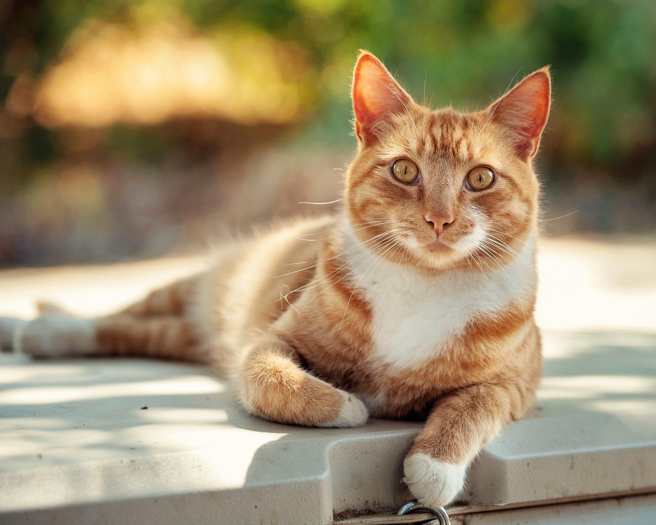 cat oustside