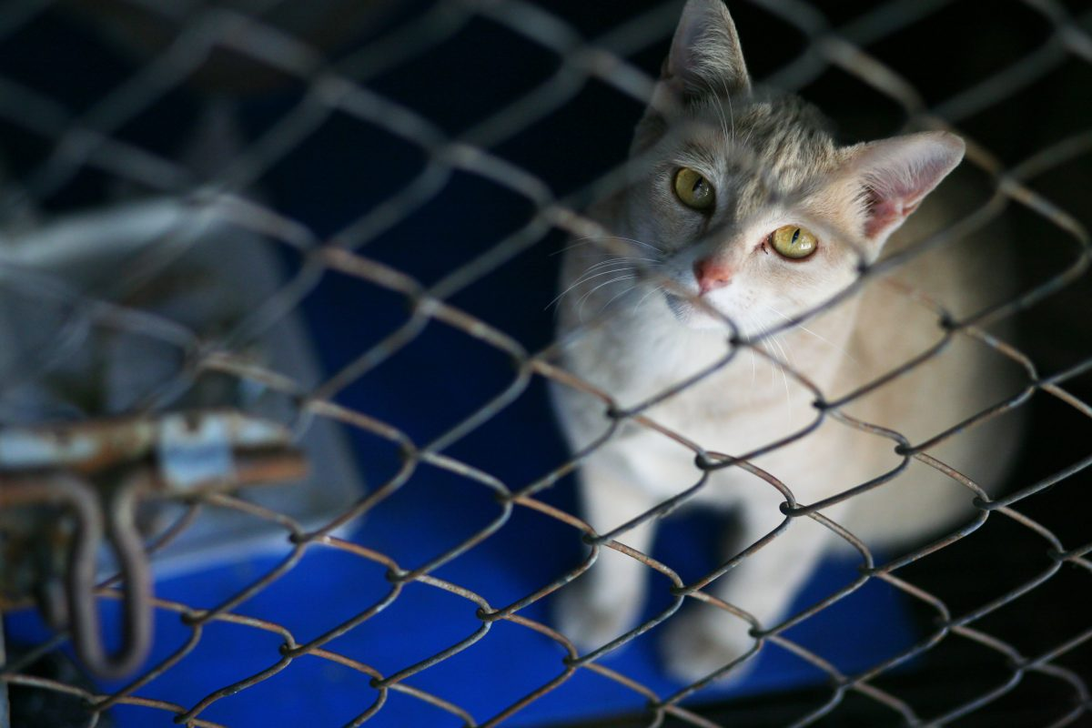 Veterans Affairs Under Fire For Spending Over $8 Million in Taxpayer Money on Horrific Cat Experiments for Medical Research