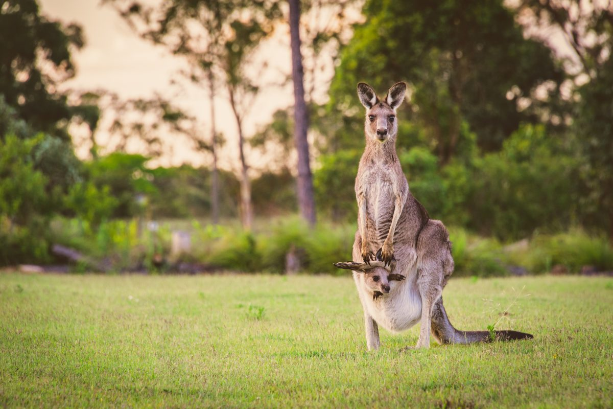 Petition: Demand Nike and Puma Stop Using Kangaroo Skin in their Products