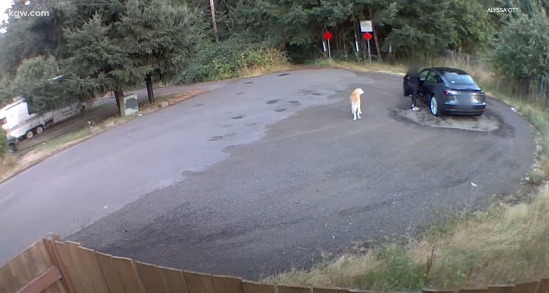 woman abandoning dog