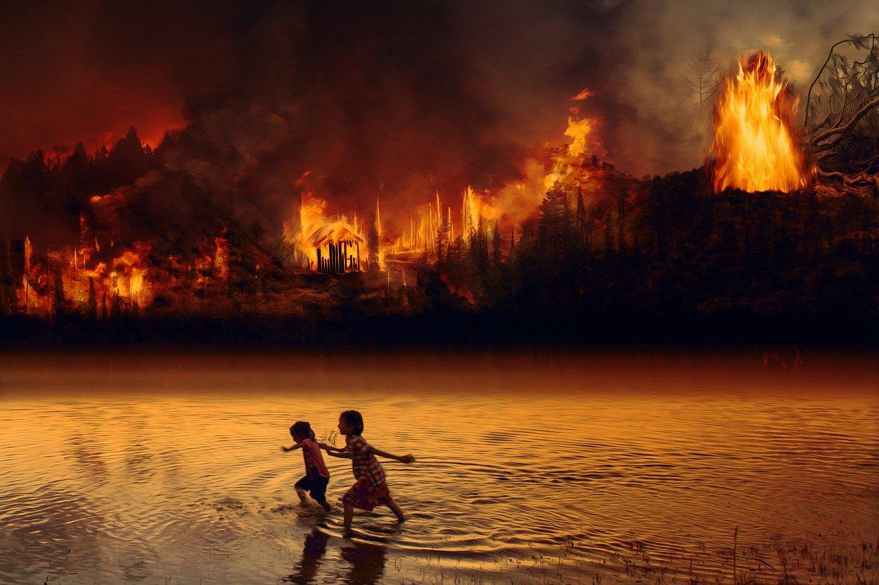 rainforest burning
