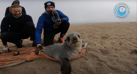 seal rescuers