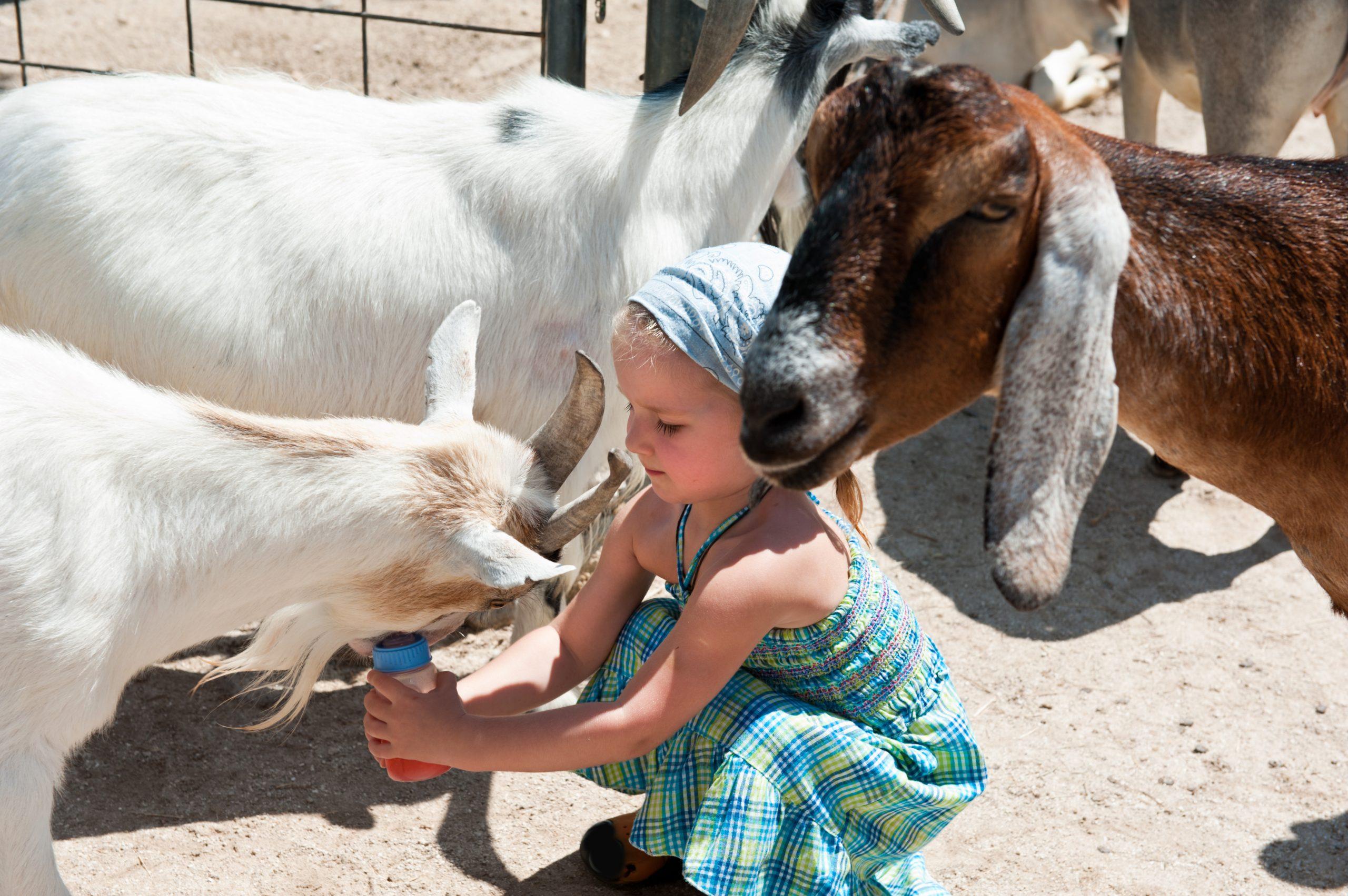 Girl Petting Zoo