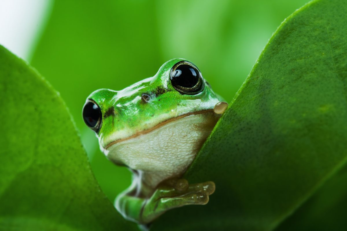 New Report Finds that the EU is a Hotspot for Exotic Pet Trade