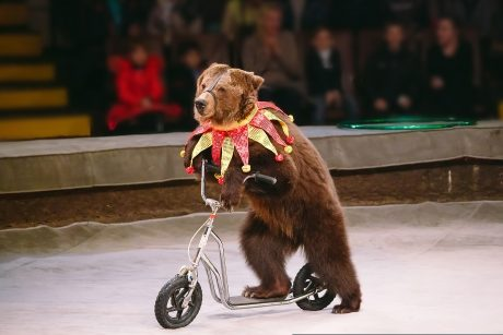 bear on scooter