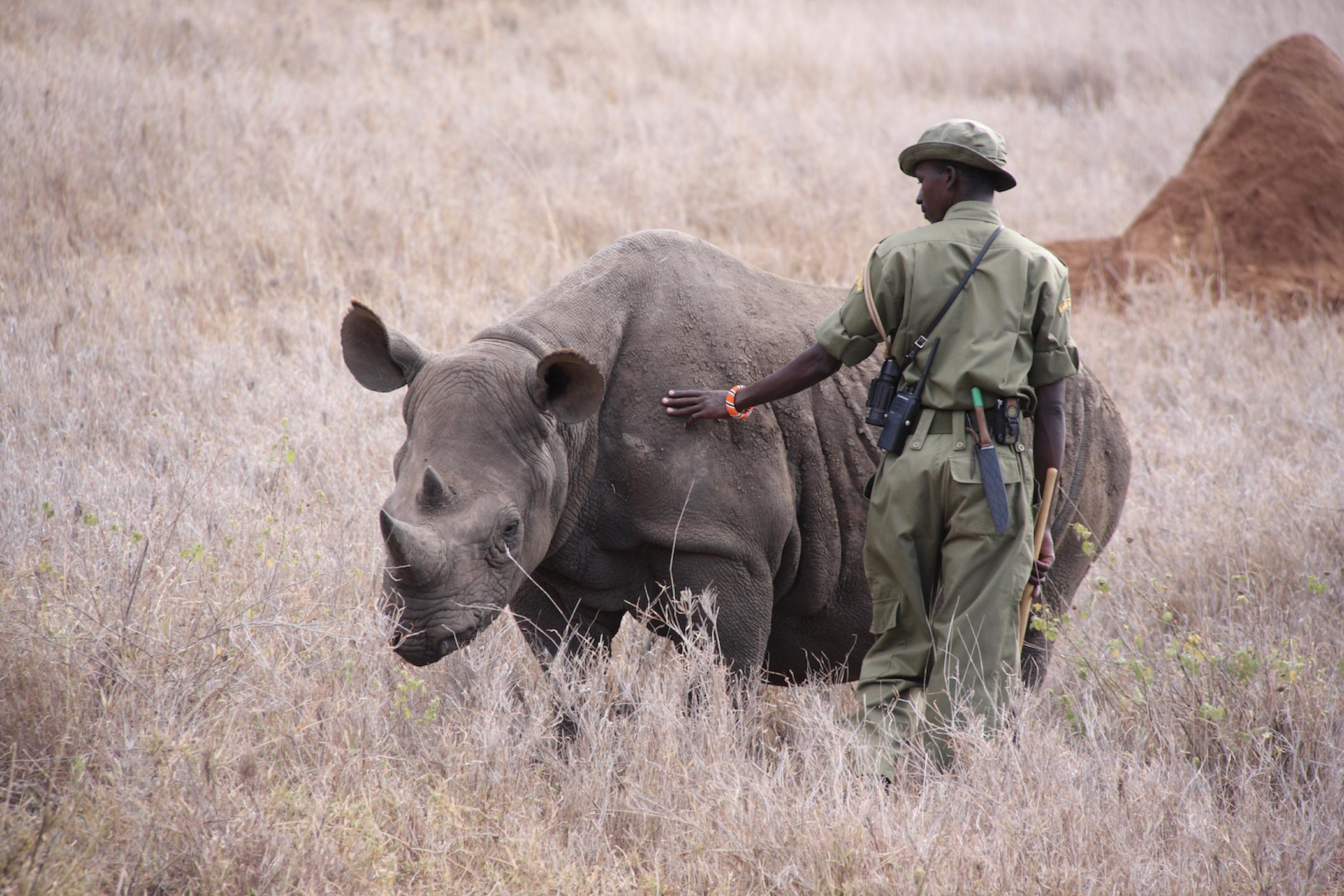 rhino with protector