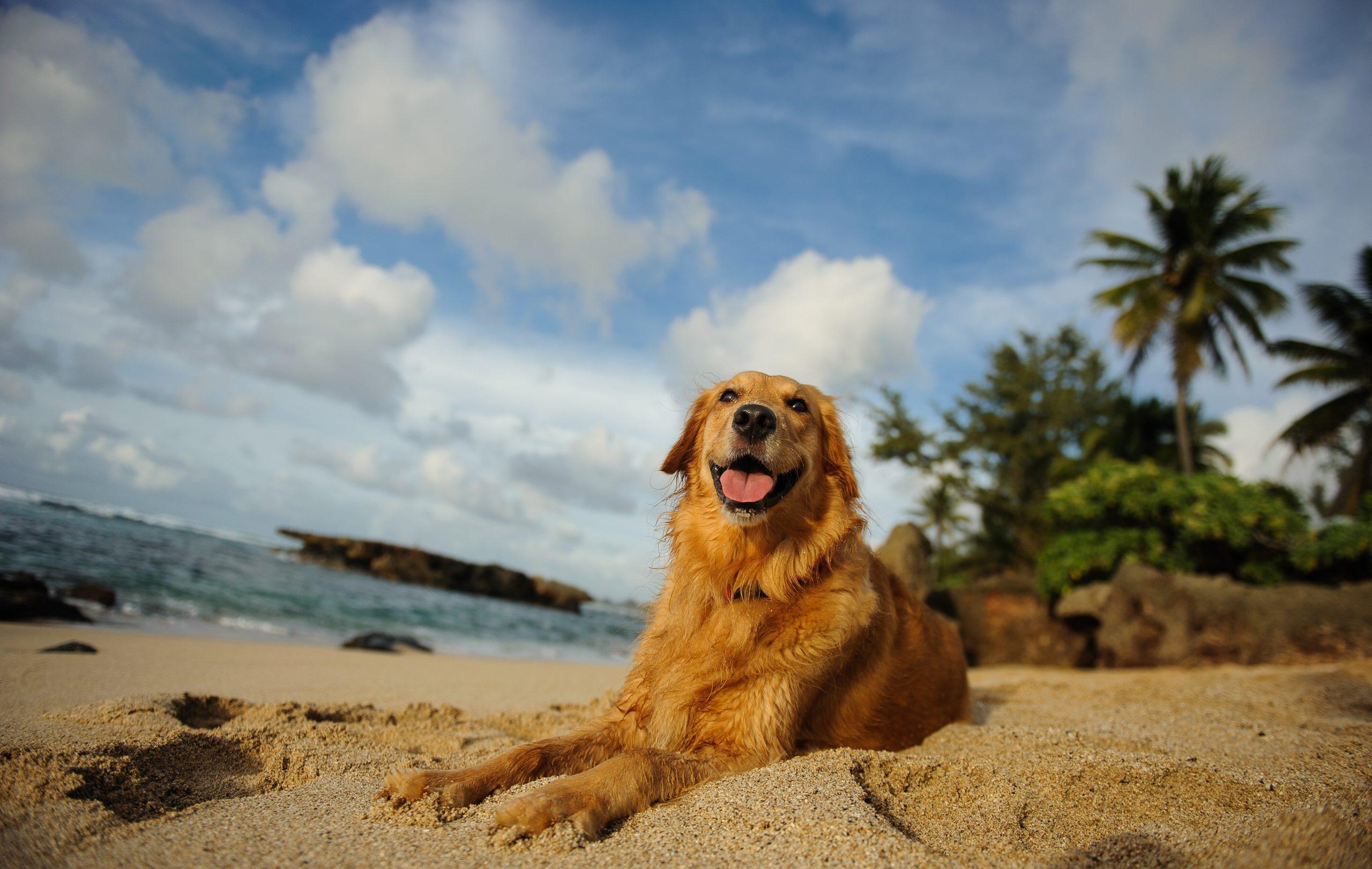 Hawaii Dog