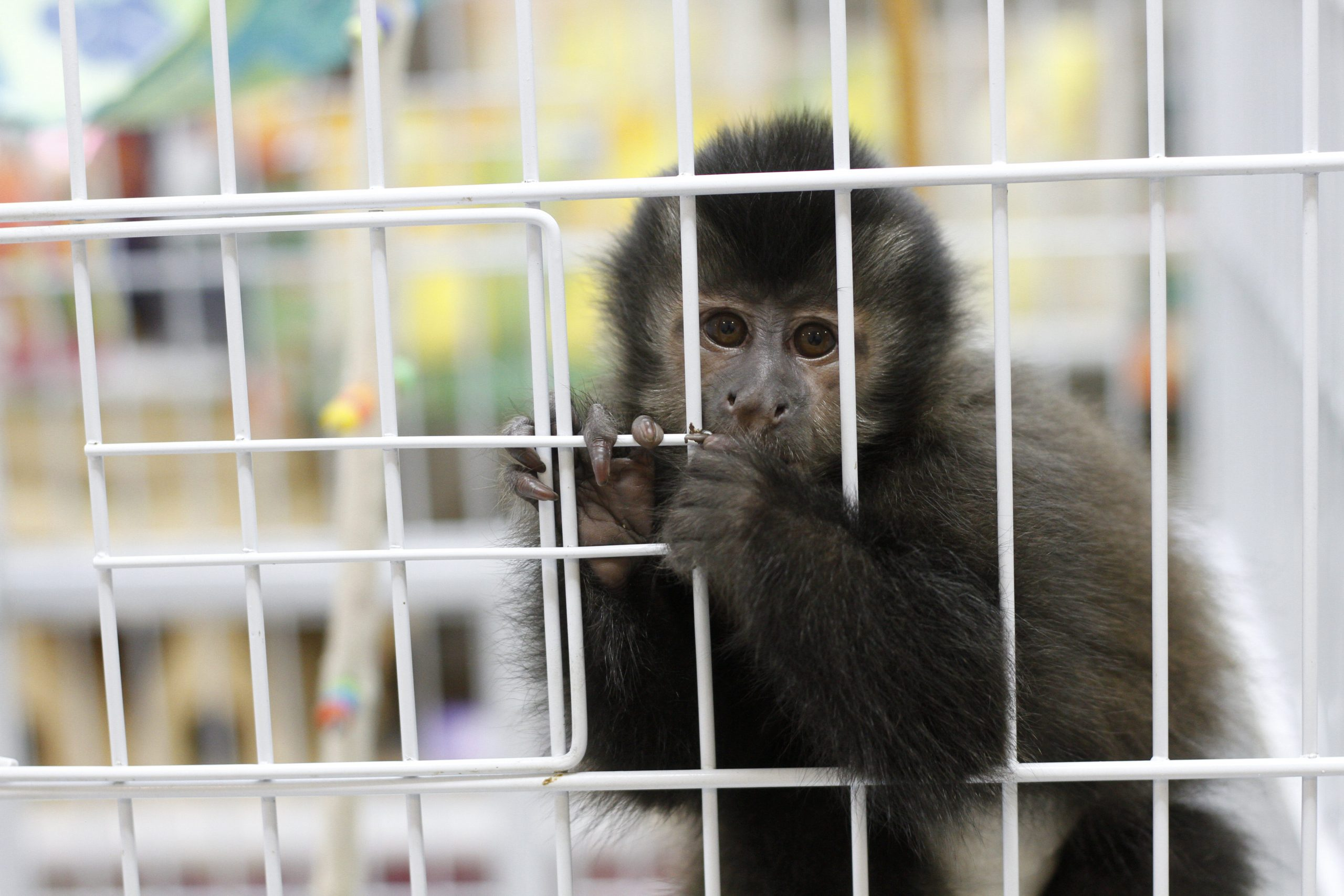 monkey in pet cage