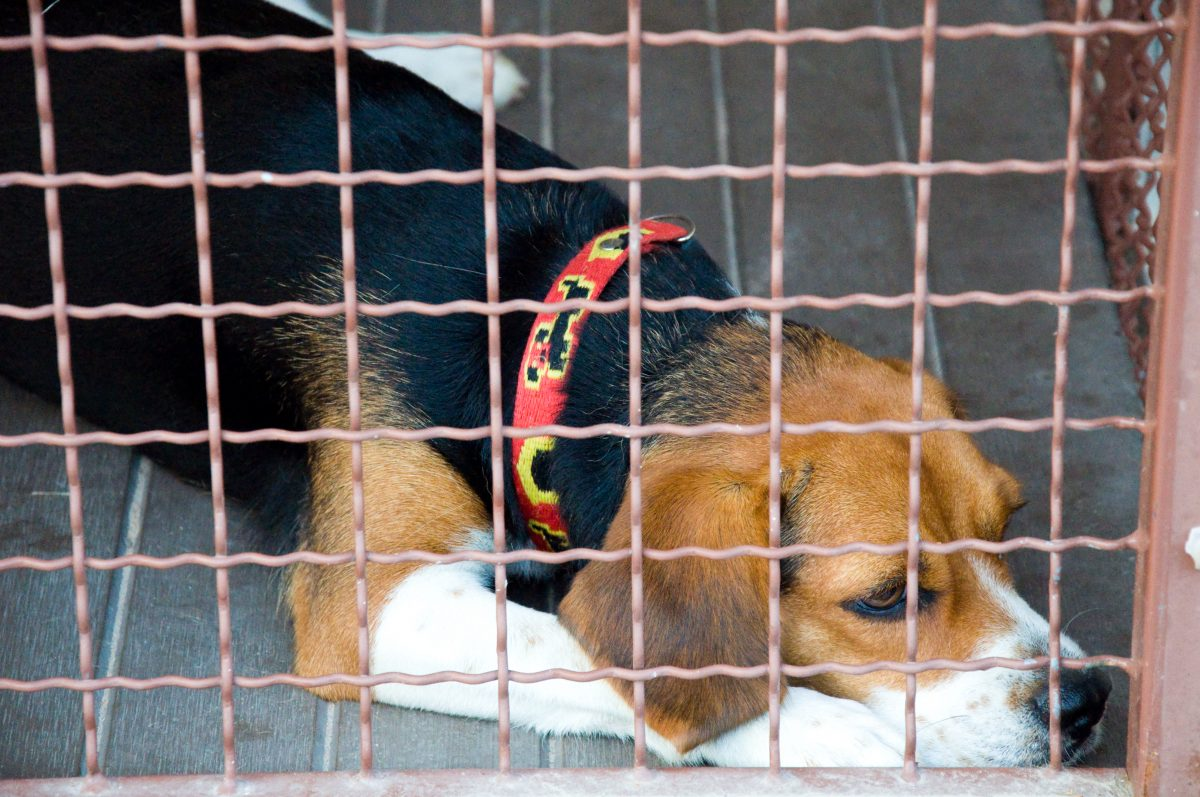 Victory! NYC Pet Store Hit with $4 Million in Fines After Abusing and Selling Sick Puppies