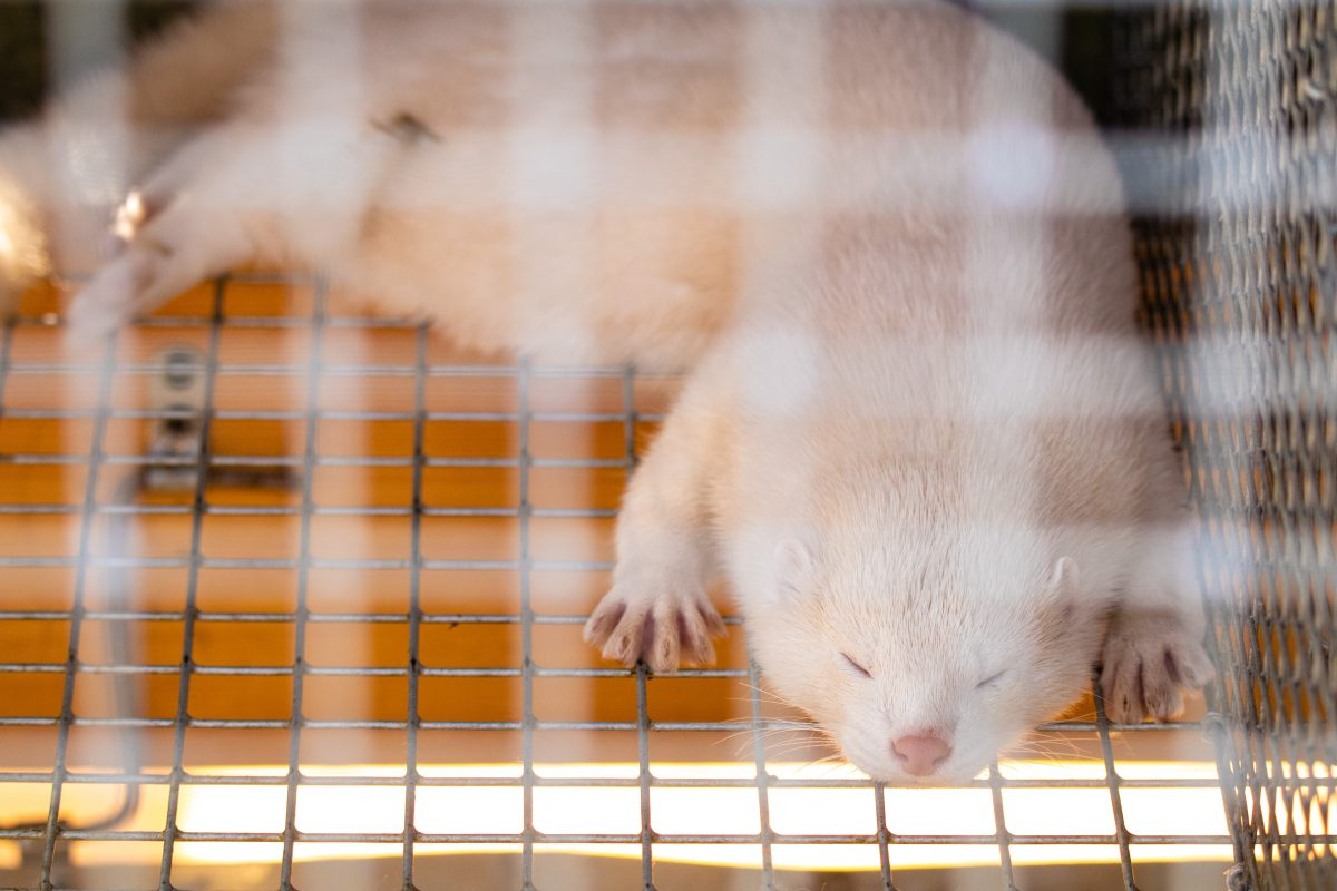 Hungary Bans Fur Farming