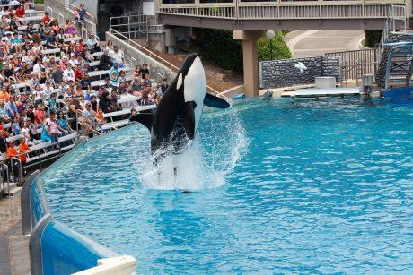 orca at seaward