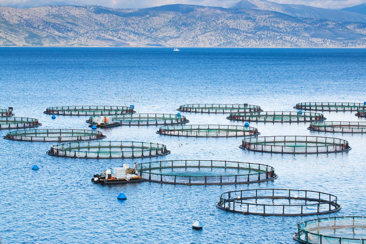 The Environmental and Public Health Impact of Commercial Fish Farming