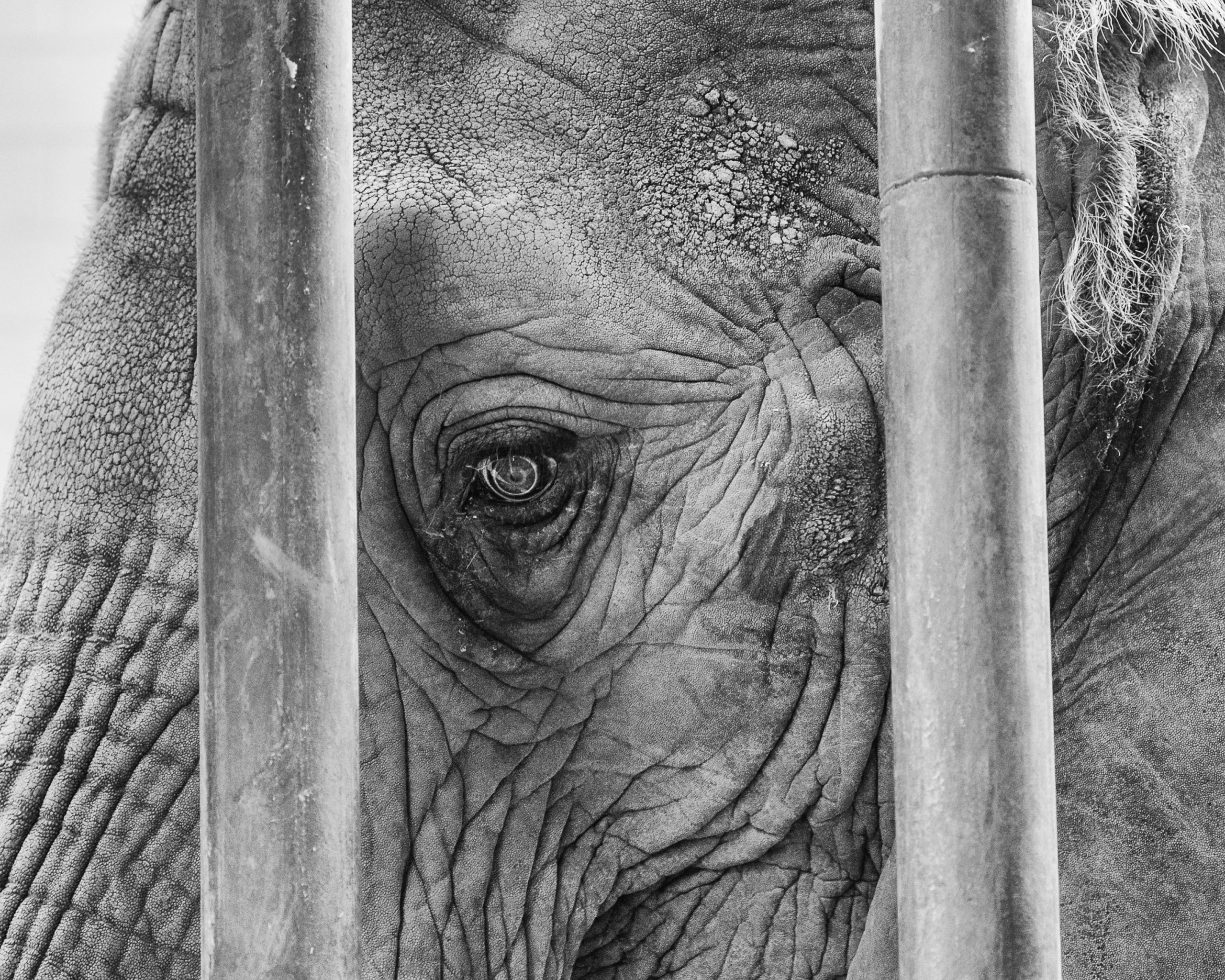 elephant in zoo cage