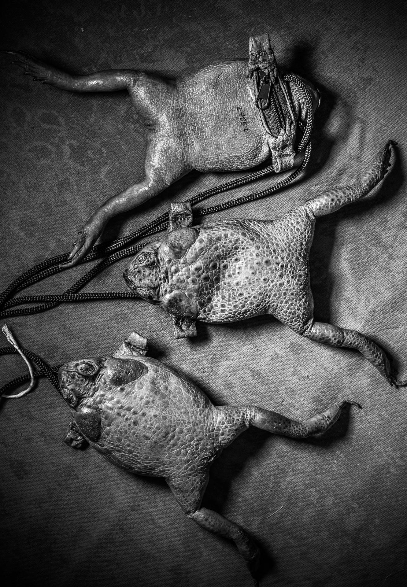 toad purses