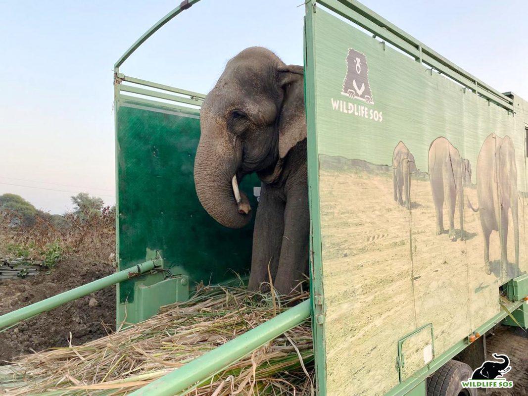 Jai Elephant