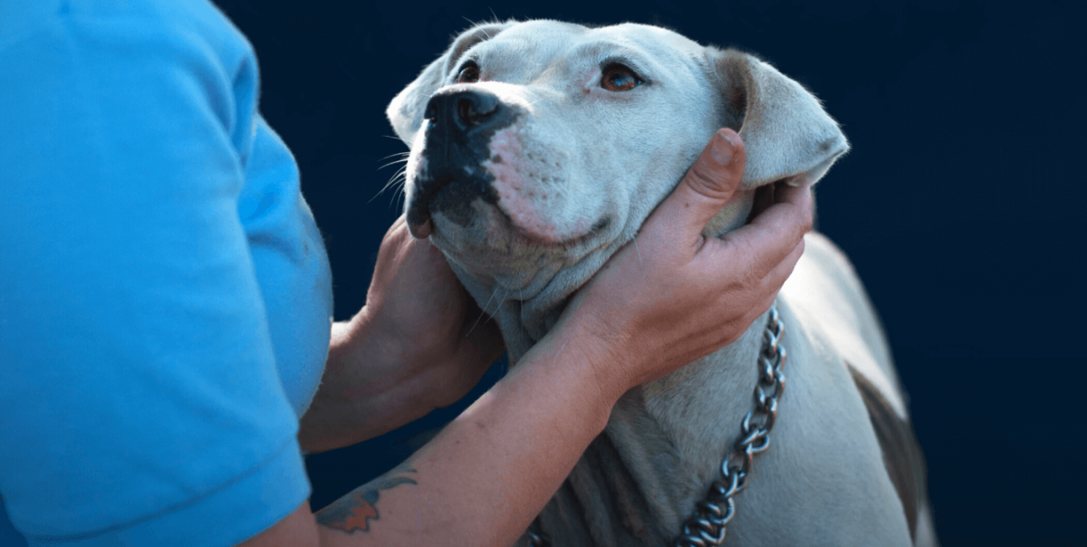 """Curious about """"PETA and euthanasia""""? Watch """"Breaking the Chain."""""""