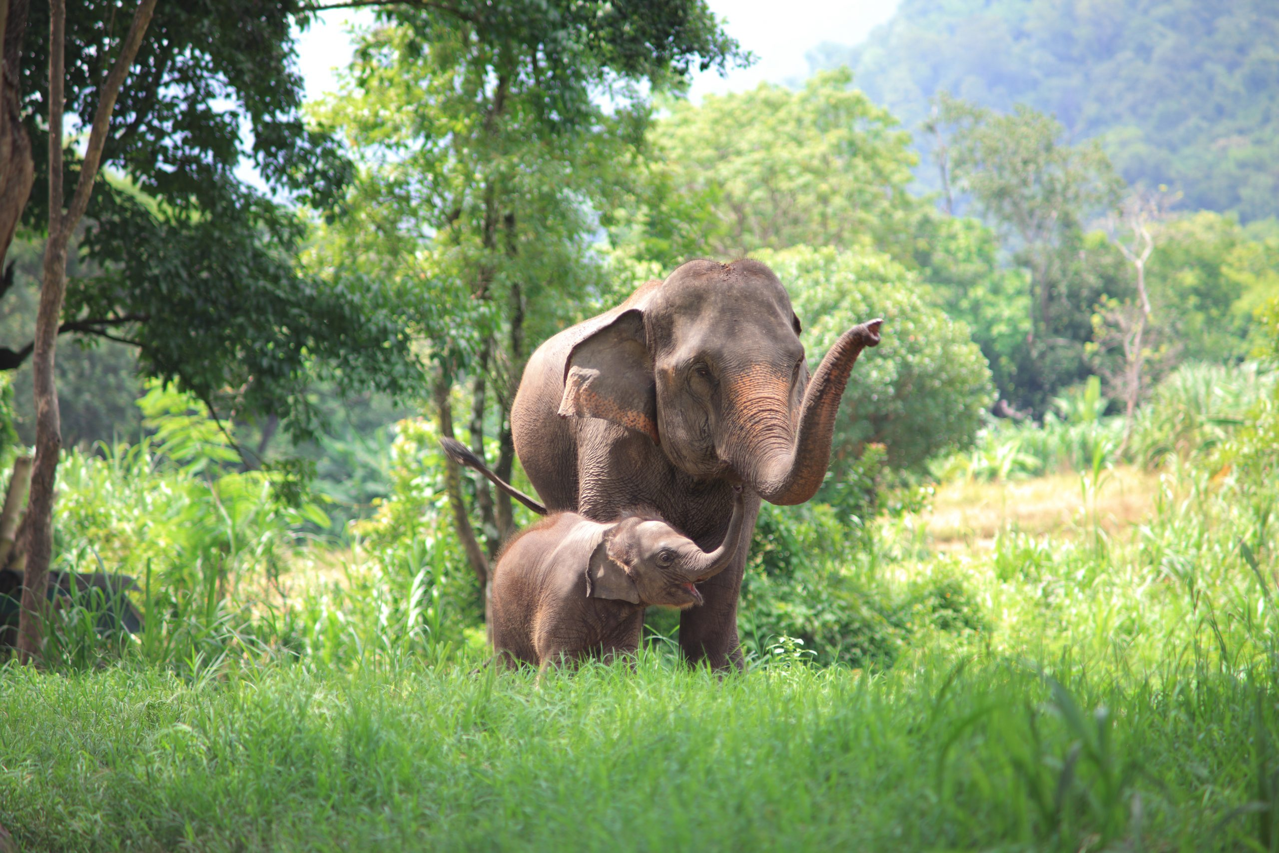 baby elephant and mother elephant