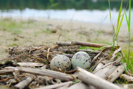 two eggs in nest on shore