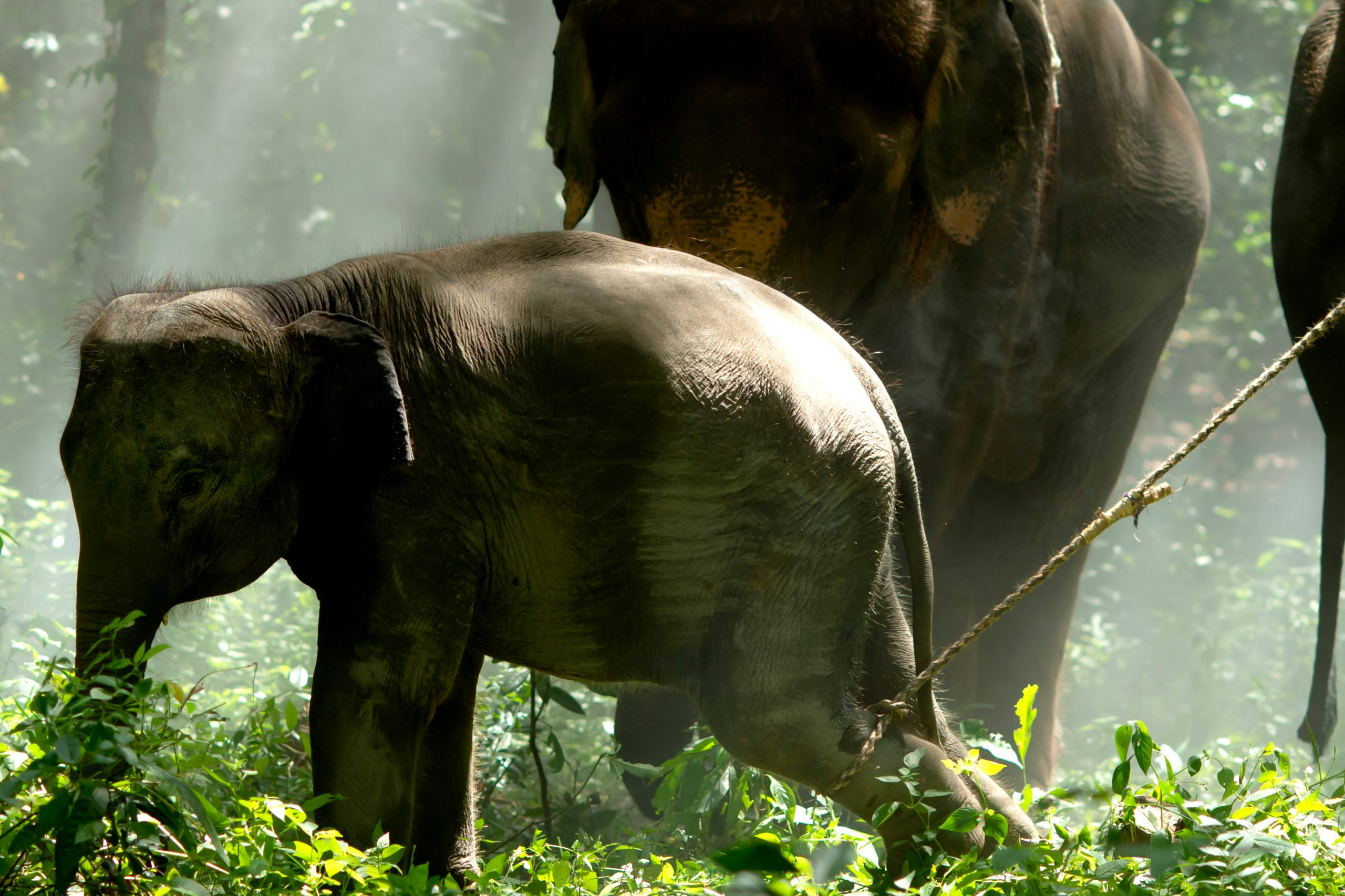 animal tourism baby elephant captured