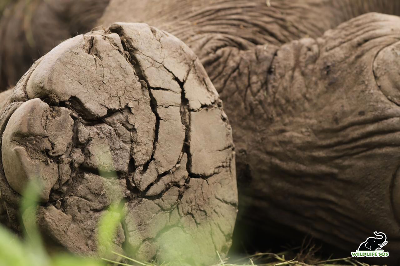Image courtesy of Wildlife SOS