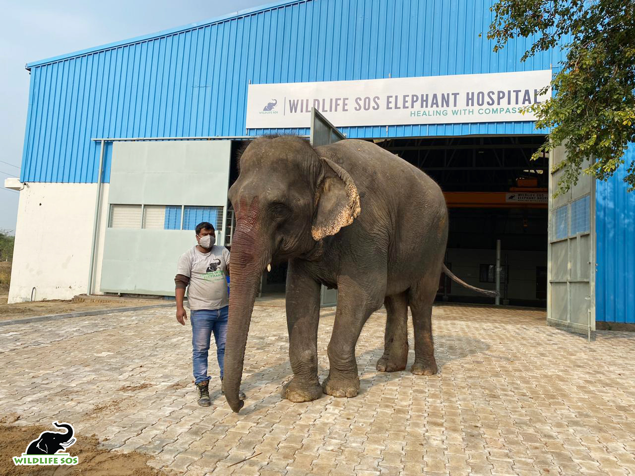 Petition: Emma the 40-Year Old Elephant Who was Force-Fed Alcohol has Been Rescued!
