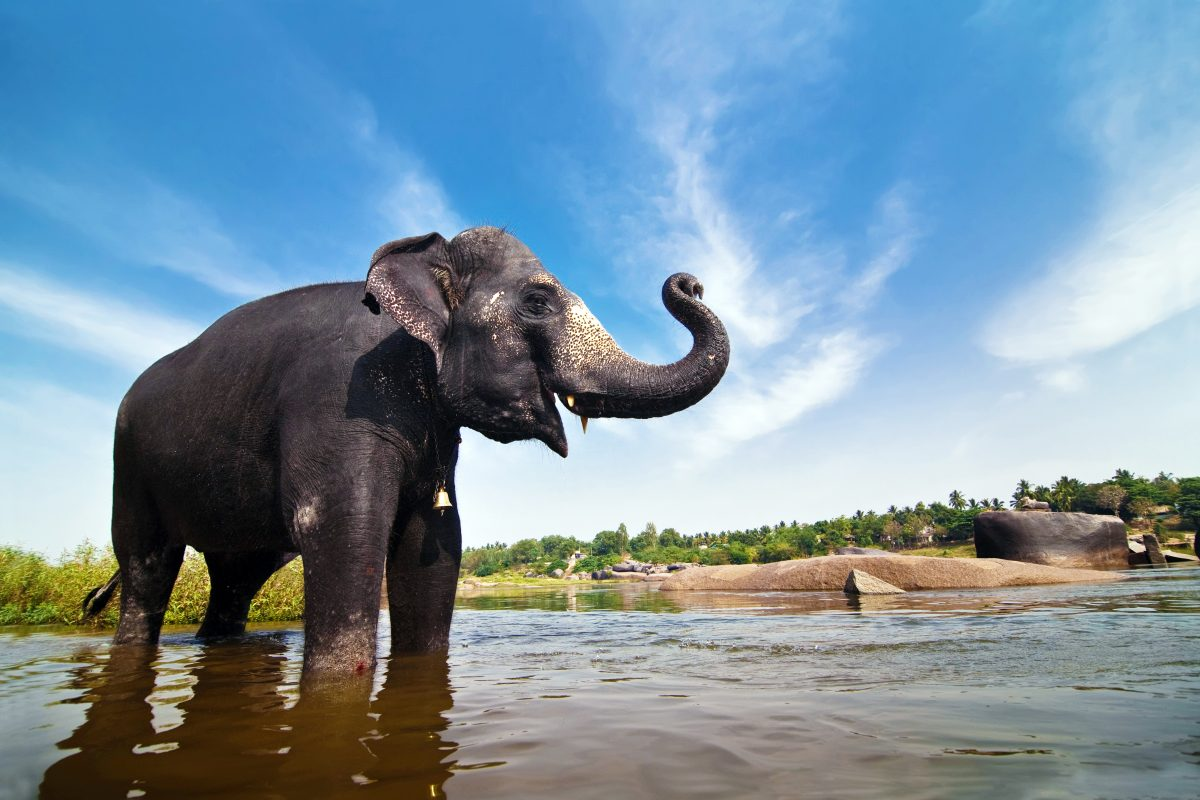 Eight Year Old Campaigns for India's Elephants