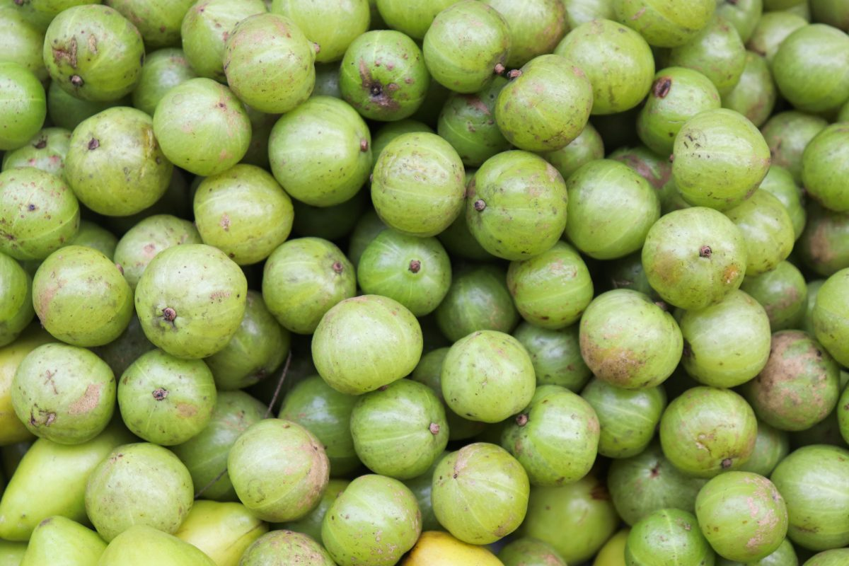 All About Amla Berry and How it Benefits Your Immune System