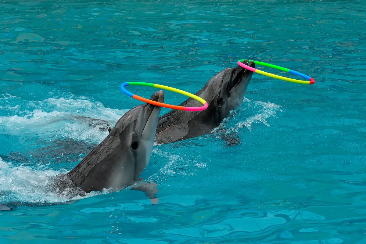 dolphins with things on noses