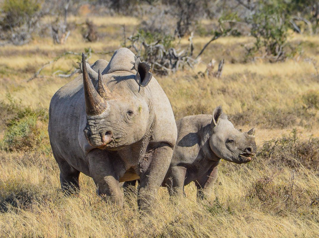 Petition: Fund Technology That Will Help Stop Poachers