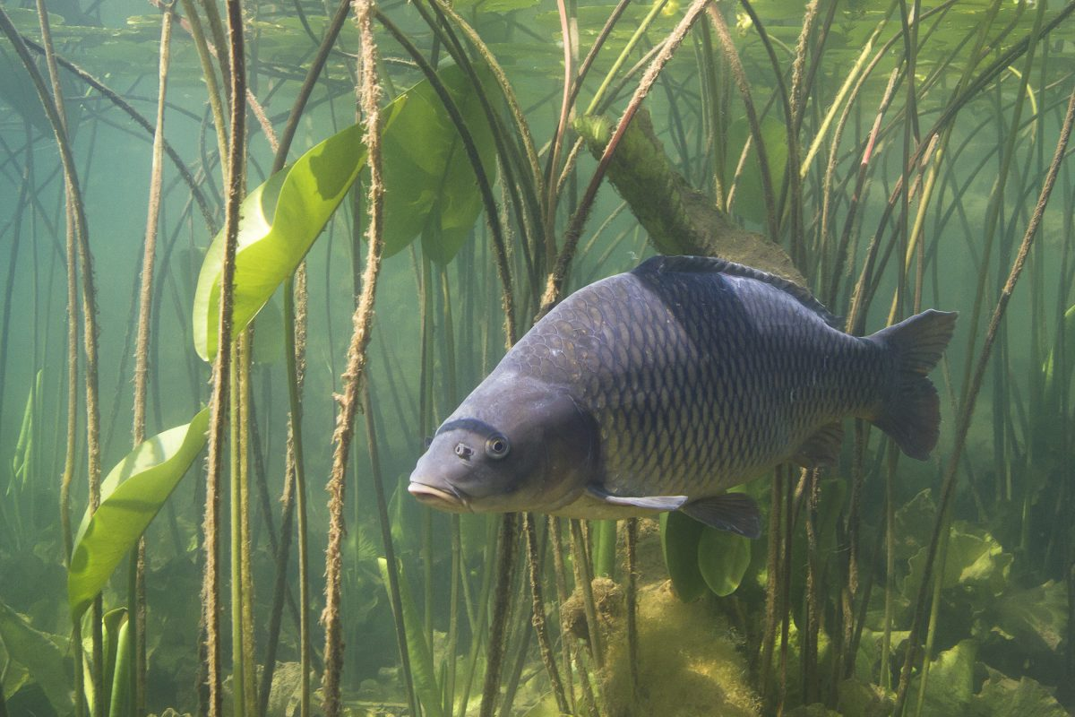 Freshwater Fish Across the World are Facing 'Catastrophic' Decline
