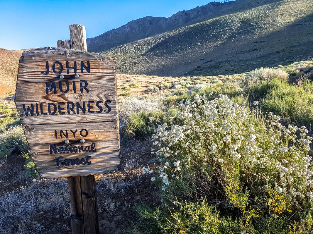John Muir Wilderness sign in front of hills, flowers.