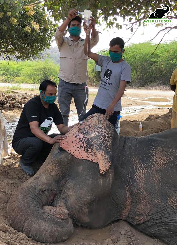 wildlife sos with elephant