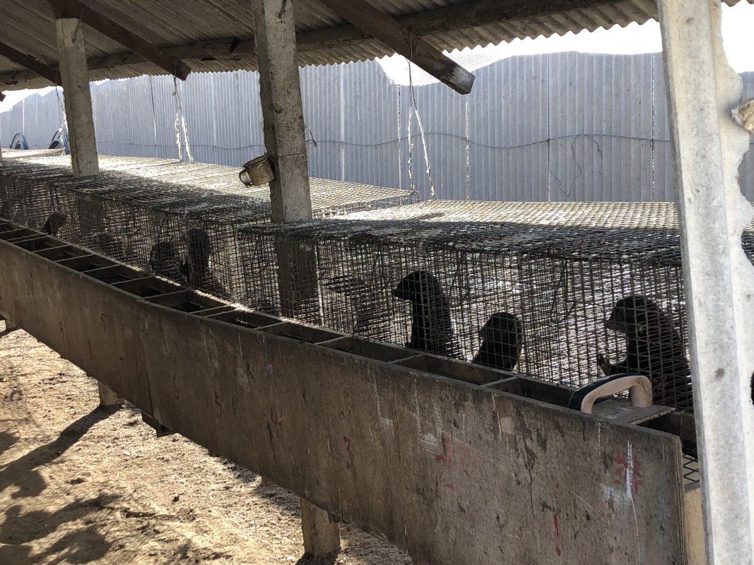 Fur Farm Investigation