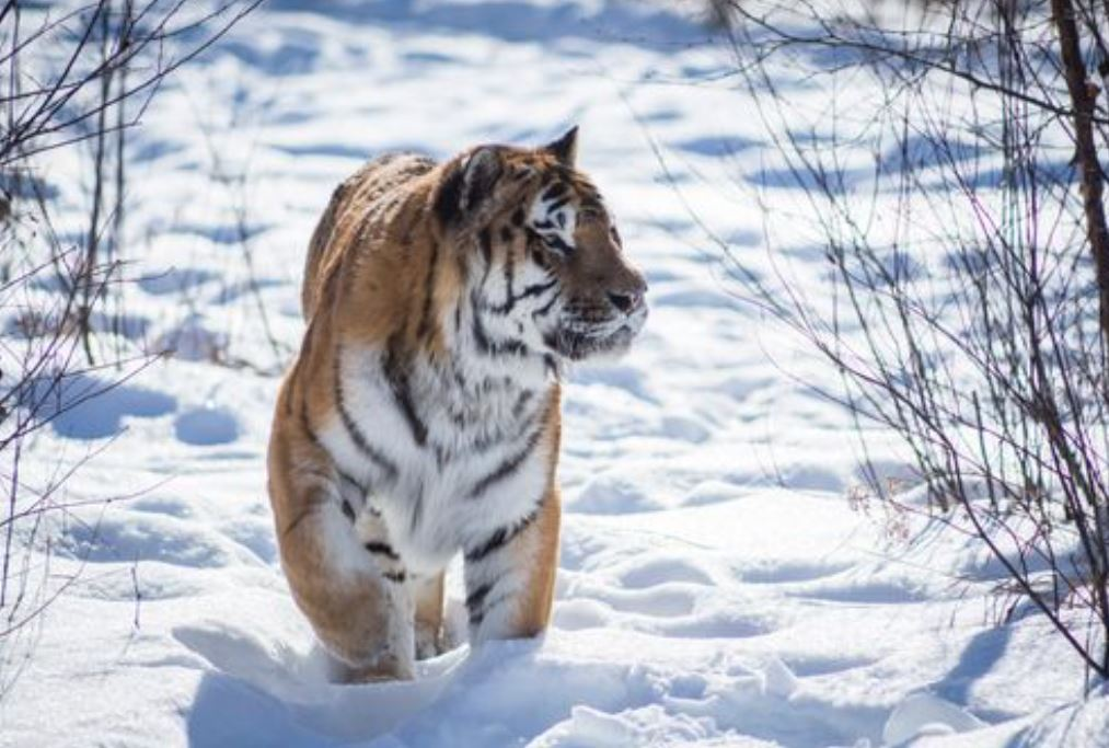 Photo of Marcus Courtesy of The Wildcat Sanctuary