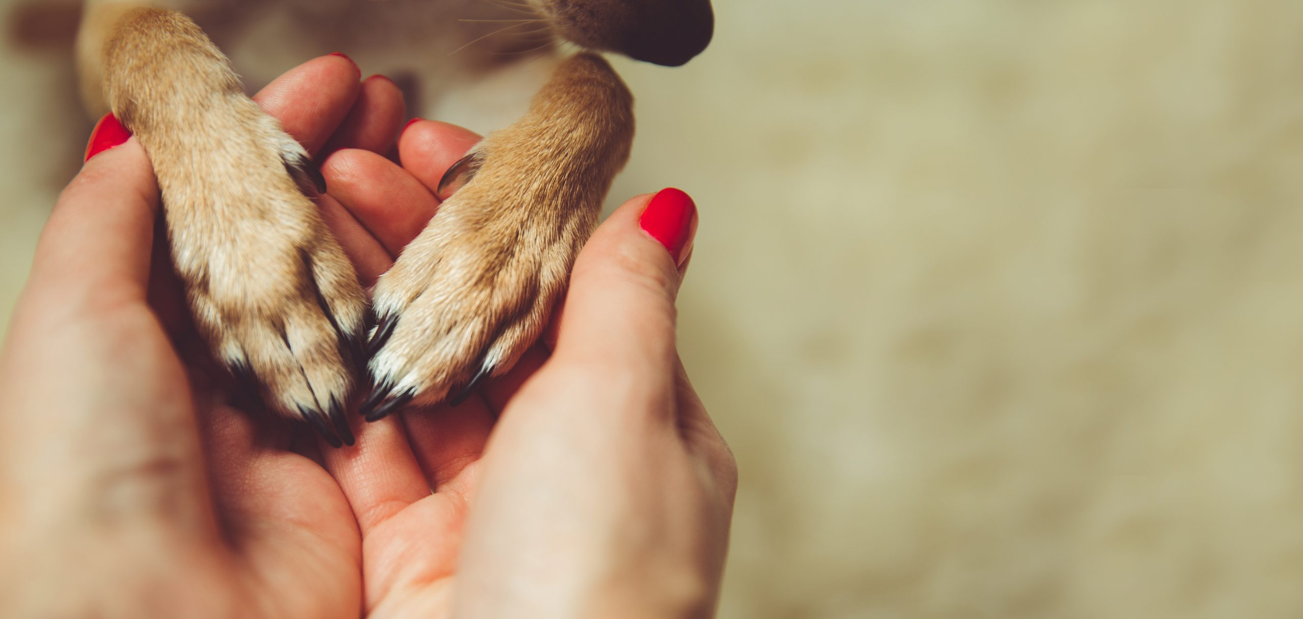paws in hands