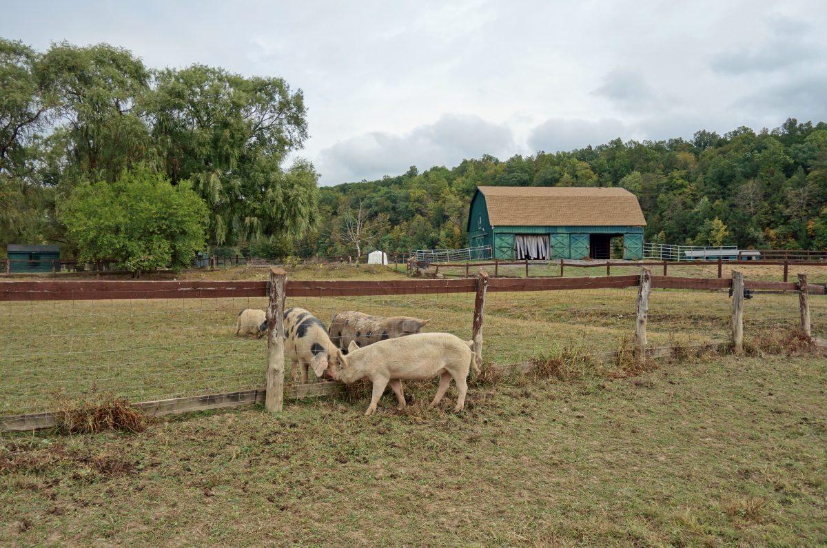 catskills animal sanctuary