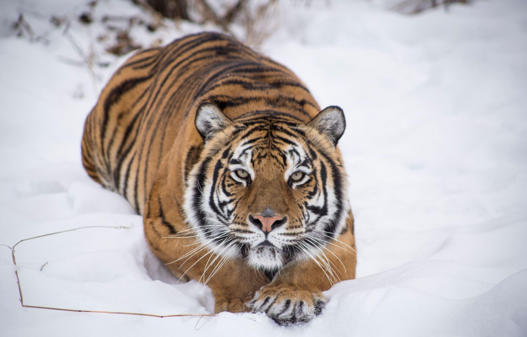 Photo of Winona Courtesy of The Wildcat Sanctuary
